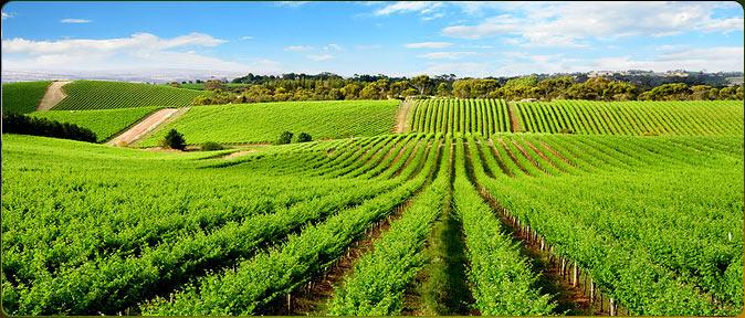 تجهیزات آبیاری کشاورزی